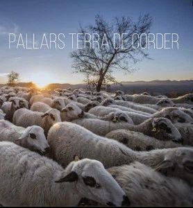 PALLARS TERRA DE CORDER